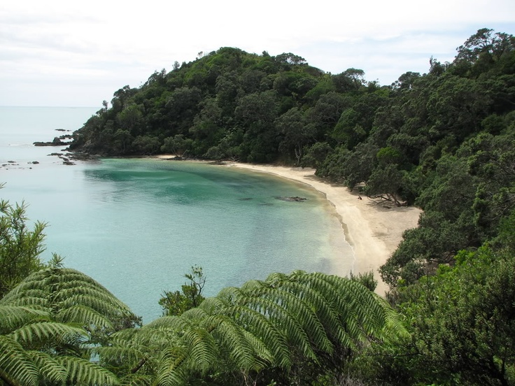 Whale Bay (Northland, New Zealand)