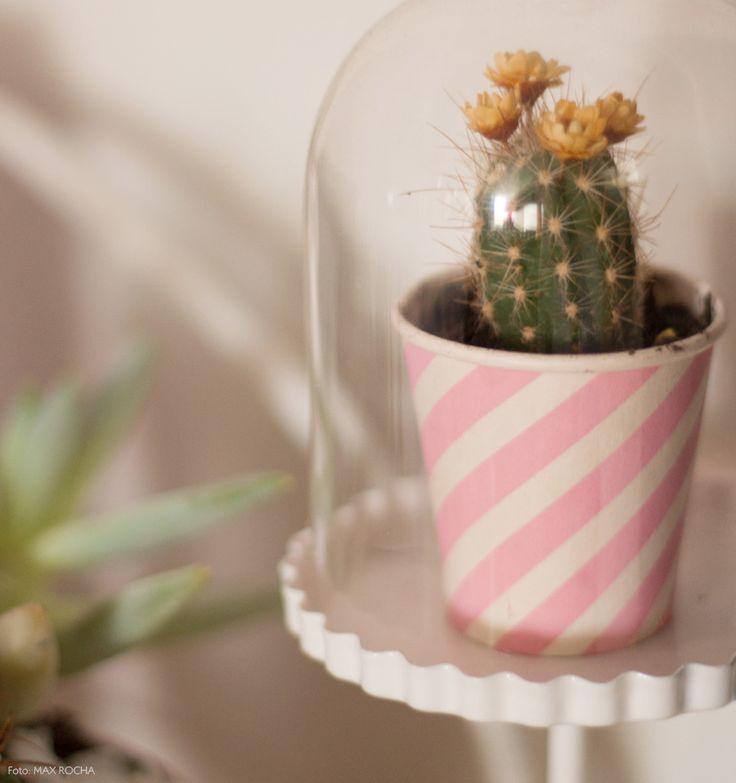 Outra ideia bacana: que tal colocar a sua suculenta em uma redoma de vidro? Fica lindo <3 Mais ideias em www.historiasdecasa.com.br #todacasatemumahistoria #DIY #decor