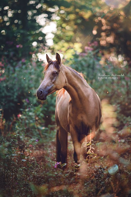 """equine-images: """" Another fairytale session.   www.carinamaiwald.com """""""