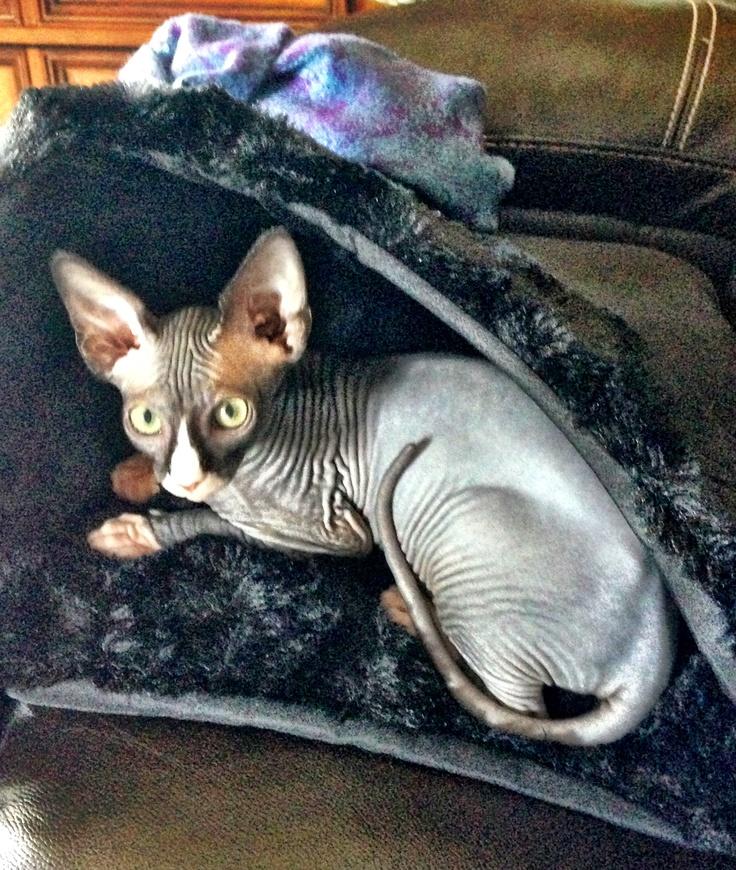 Jaxx in his fur bed