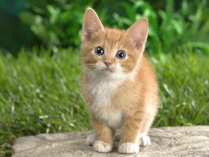 Cute Puppies And Kittens Wallpaper: Best 25+ Images Of Cute Cats Ideas On Pinterest