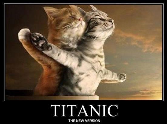 """Titanic   I repinned this, it only had titanic on it.  I want to add Linda and Dawn...my two friends that sand """"Near, Far, no matter...""""  till I thought I would throw up.  This pic made me laugh allot!!!: Animals, Pets, Funny Stuff, Humor, Funnies, Titanic Cats, Things, Kitty"""