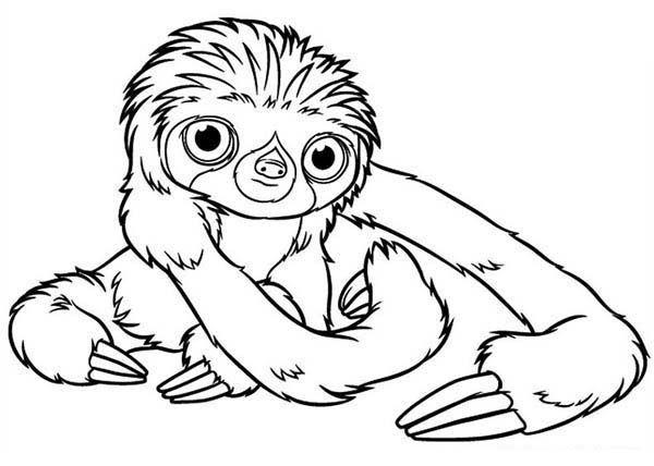 Sloth, Baby Sloth Coloring Page: Baby Sloth Coloring ...