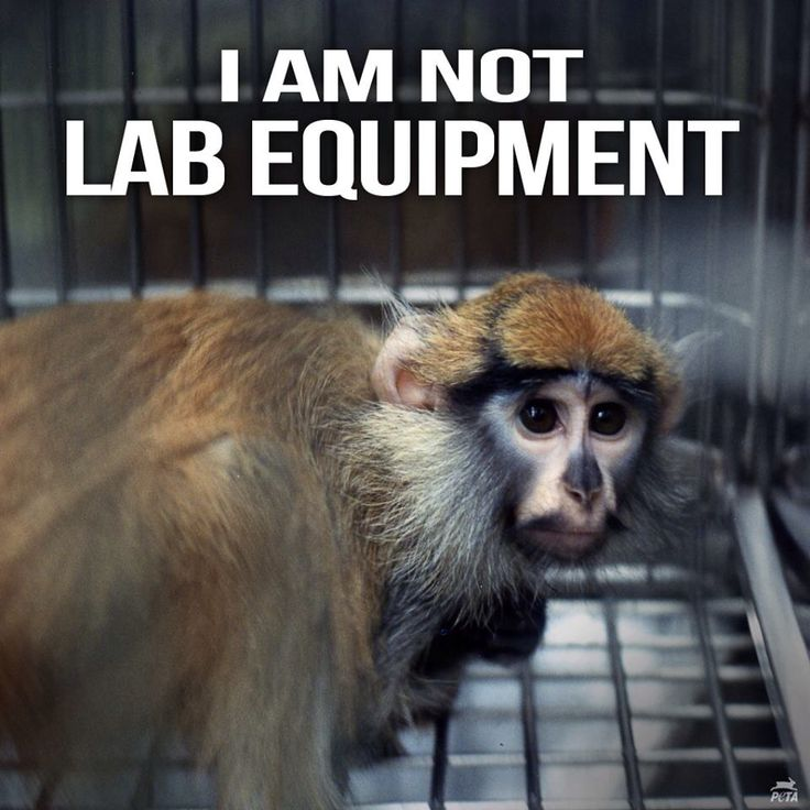 an analysis of vivisection sciences cruel experimentation Claiming that microfluidics and microdosing can analyze drug effects on a full living  testing on animals is not only cruel but unnecessary i believe that most animal testing is done to keep these ''scientists'' in their jobs.