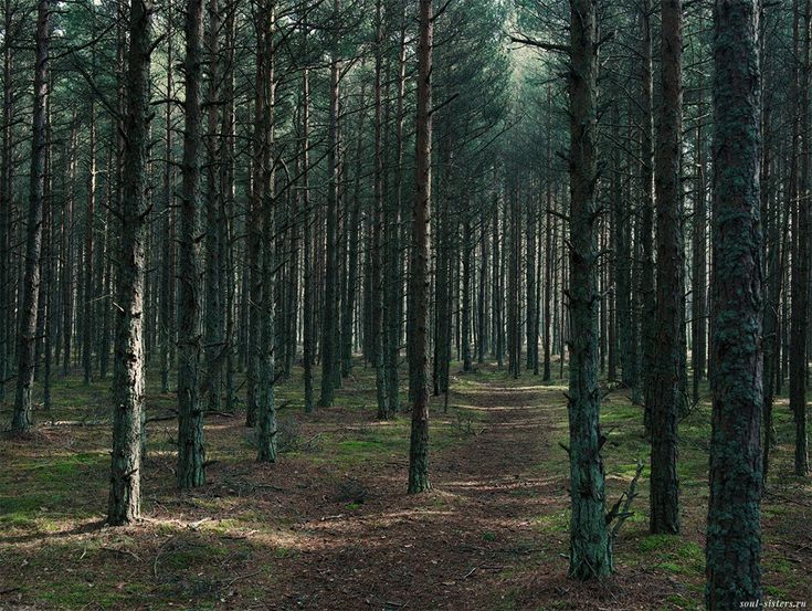 Россия. Куршская коса. Таинственный лес