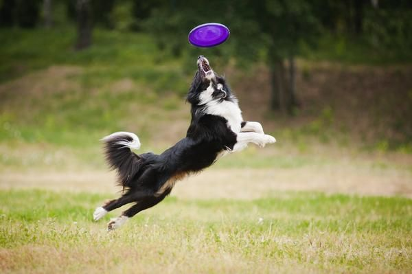 Action-Packed Pup :: An active dog is a happy dog! Dog Enrichment Boxes