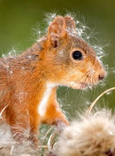 17 Best images about Squirrels on Pinterest   Photographs
