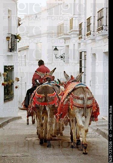 burros 'Burrotaxis', de Mijas.  Pueblos Blancos ( 'pueblos blancos'), Costa del Sol, provincia de Málaga, Andalucía, España.