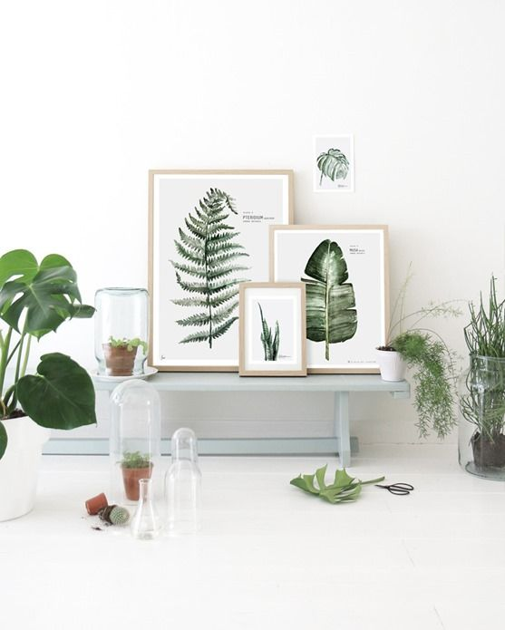 Going Green: Botanicals on Display