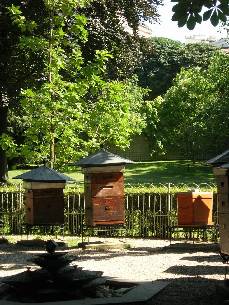 Le rucher du jardin du Luxembourg
