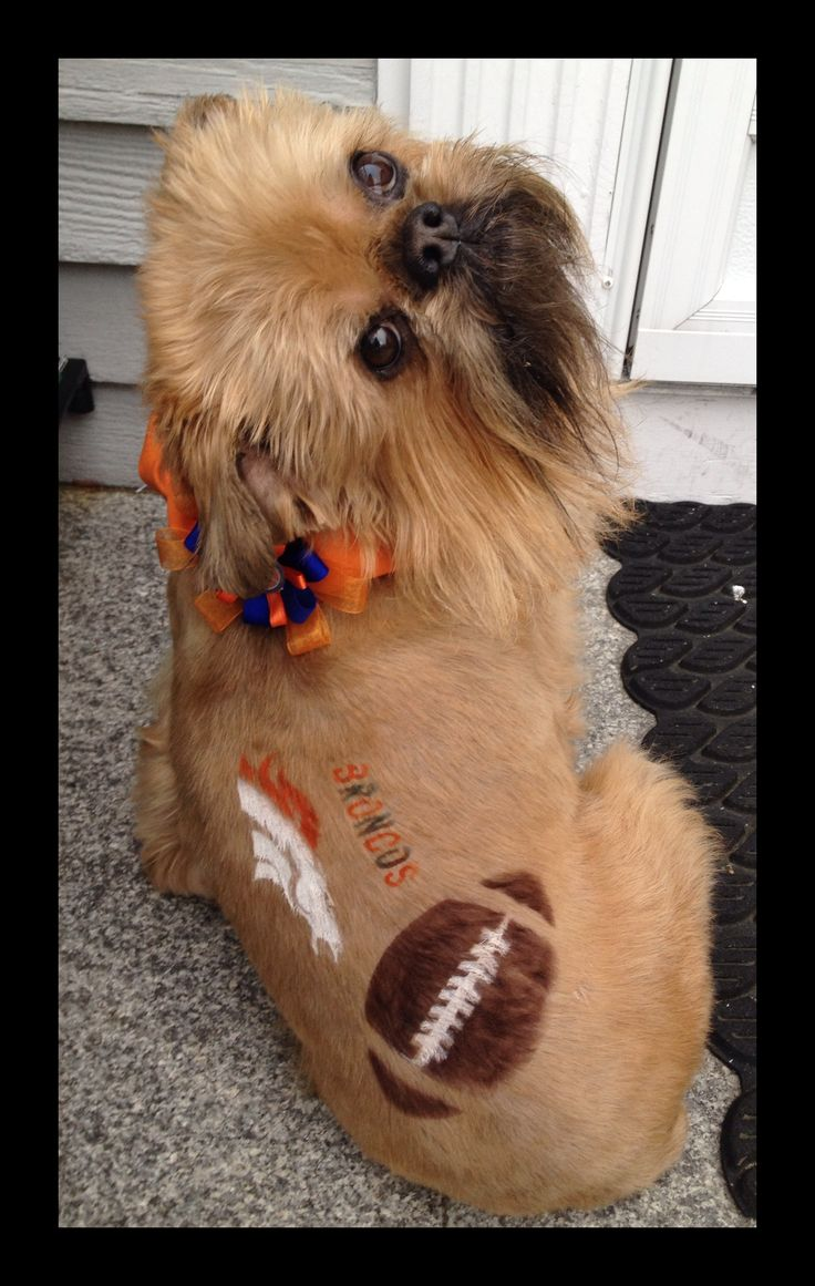 -Repinned- Creative Grooming ....Super Bowl Ready ........Broncos fans.