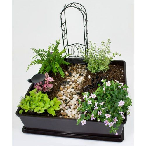 Fairy Garden Plants And Ideas