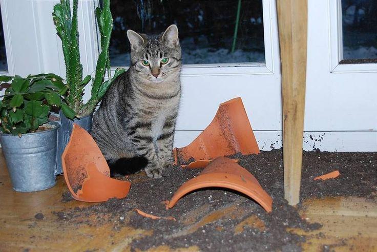 Un Chat qui a fait une grosse bétise !