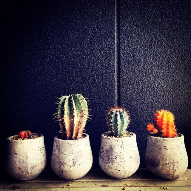 tsunoさんの、男前,多肉植物,NO GREEN NO LIFE,サボテン,リビング,のお部屋写真