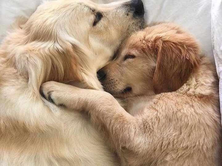 Cute Animals Gallery Cute Dog Pictures Cute Puppies Cute Animals