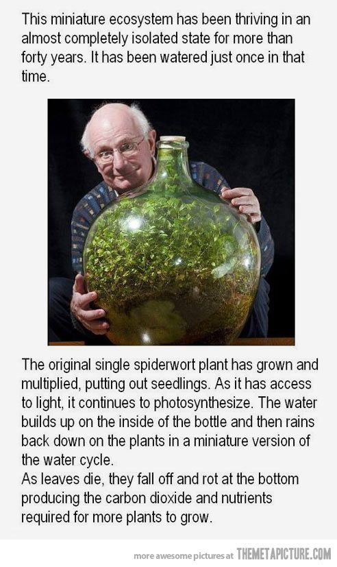 A small world inside a bottle…