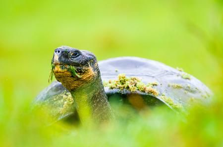 THE GIANT OF THE GALAPAGOS Photo by Enrique del Campo — National Geographic Your Shot
