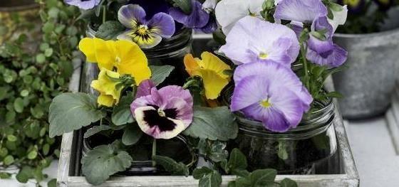 Stemor - vårens favoritt!   Hageland.no