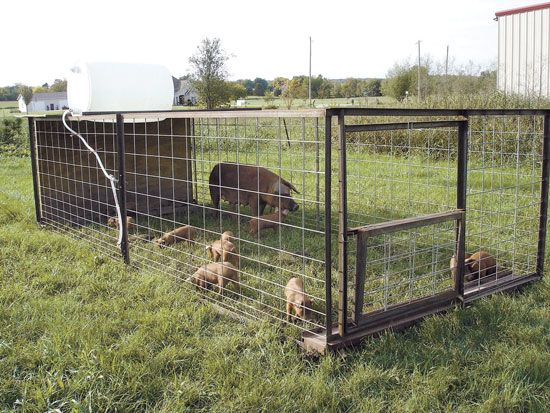 portable pig pen | Super-Efficient Outdoor Oven and Portable Pig Pen for Pastured Swine ...
