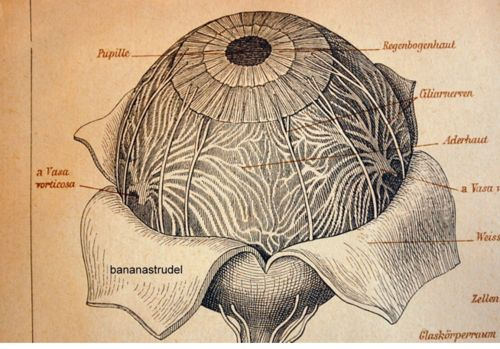 The human eye (or death star landing in a flower)