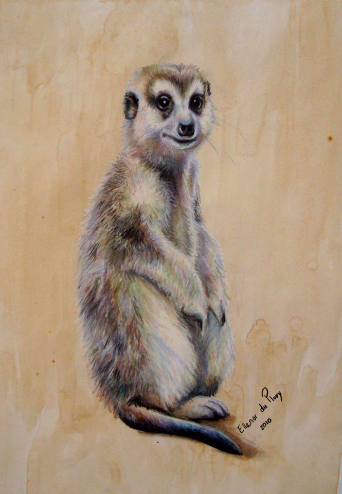 Meerkat - Pastel on Coffee Paper Artist: Ellenor Hastie