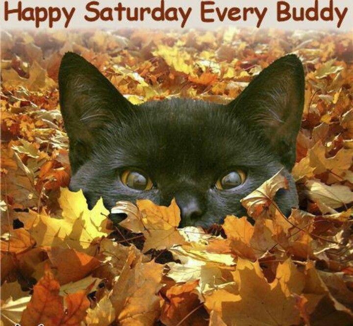 Bildergebnis für Happy Saturday with Fall