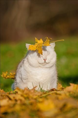 In een ideale wereld zou het elke dag dierendag zijn. Die ideale wereld begint in eigen huis. Of beter gezegd: in onze eigen tuin. Met enkele simpele aanpassingen bied je een leuke thuis aan een hele waaier aan dieren. Bed & breakfast Hark vallende bladeren samen. Zo creëer je een mooie schuilplaats voor ongewervelde dieren. …