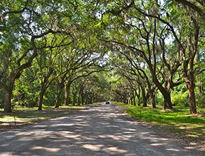 Wormsloe Historic Site   Georgia State Parks
