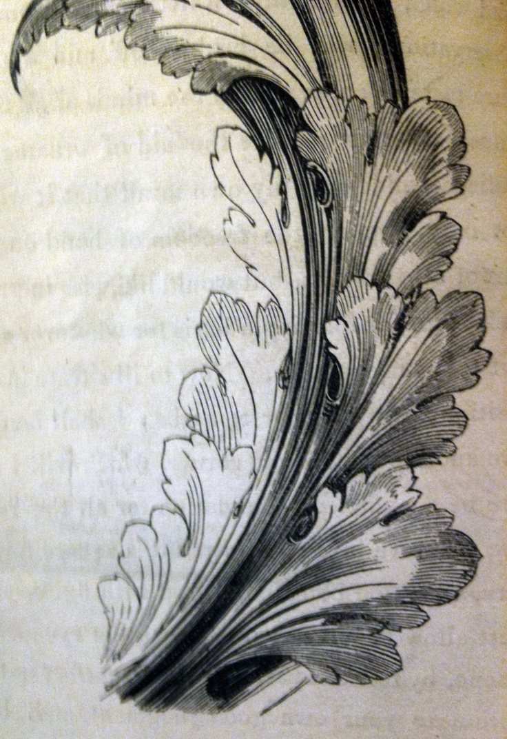 1000 images about acanthus on pinterest baroque for Acanthus leaf decoration