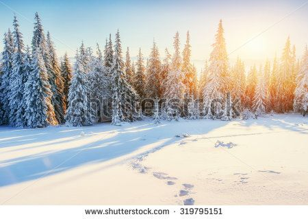 Fantastic winter landscape in the mountains of Ukraine - stock photo