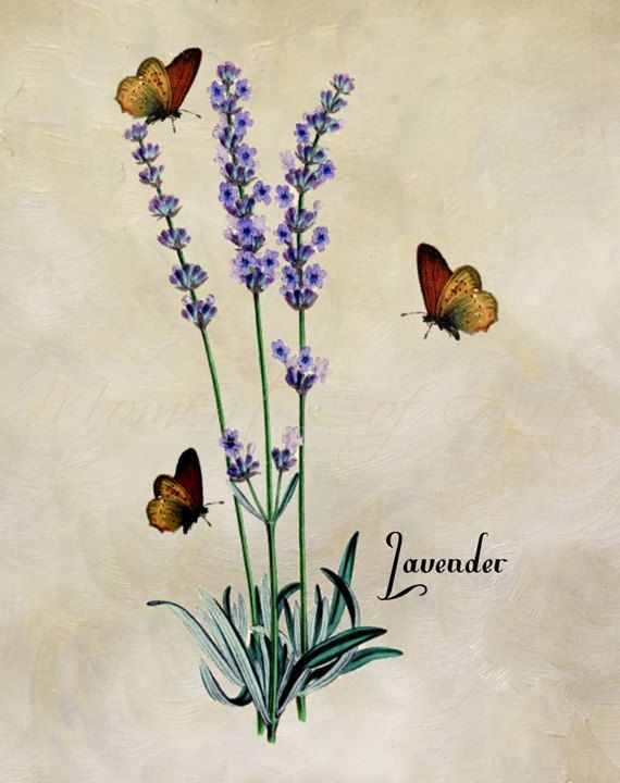 Lavender with Butterflies Vintage Inspired Print от MomentsOfArt