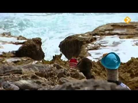 Koekeloere - Moffel en Piertje op vakantie naar de Antillen 2 - 05-06-2013 - YouTube