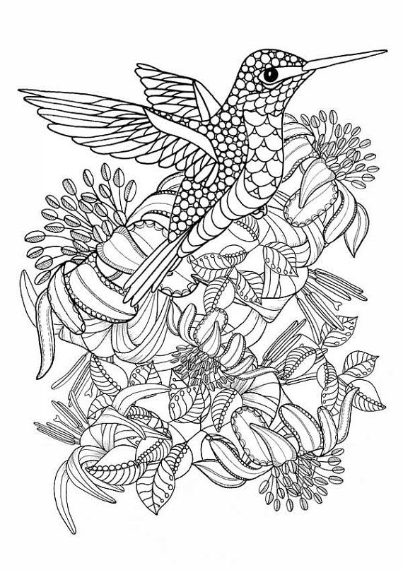 Hummingbird Printable Coloring Pages. Digital download of beautiful Humming bird art. Adult Colouring Pages.