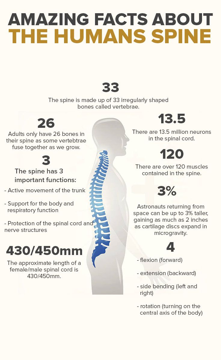 Amazing Facts about the Humans Spine  https://myjeffreyjones.myshaklee.com/us/en/shop/healthysolutions