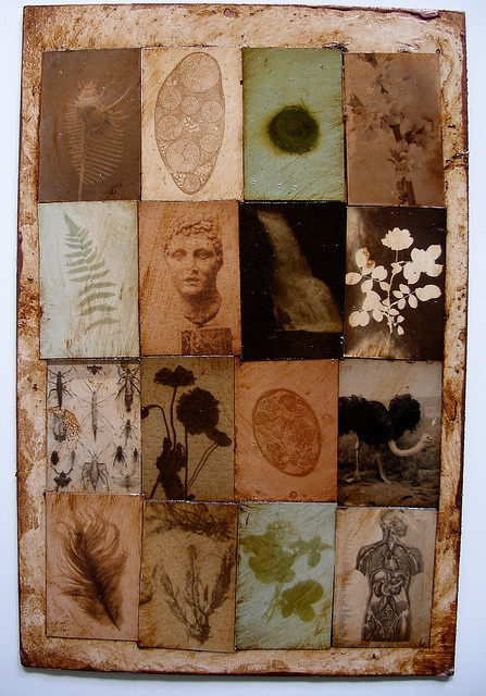 NPcollage2 by fauneyerby, via Flickr