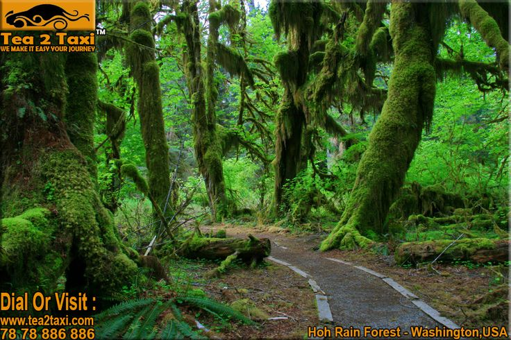 Hoh Rain Forest - Washington, USA..!! One Of The Largest Temperate Rain Forest In The U.S..!! #Best #Taxi And #Driver #Service #Provider #Ahmedabad Call : 78-78-886-886/78-78-884-884, www.tea2taxi.com  For More Information #Click Here - http://tea2taxi.blogspot.in/2016/07/hoh-rain-forest-one-of-largest.html