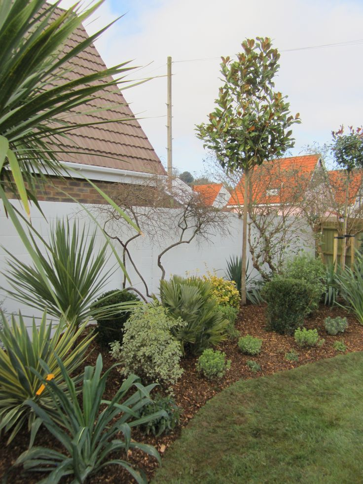 Garden planted with architectural evergreen, hardy plants