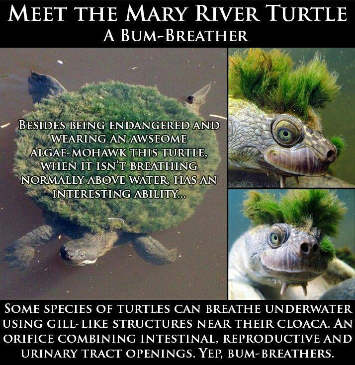 Nice..a Mary turtle