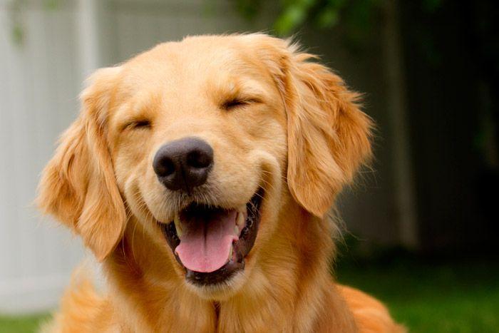 umsorriso de um cão amigo