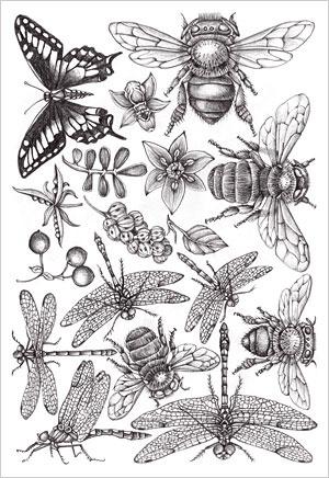 Patterns and Designs - Joyce hamillrawcliffe - Picasa Web Albums