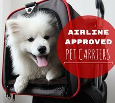 These airline approved pet carriers are ideal for traveling in-cabin. These under seat carriers will keep your dog or cat safe and happy in the airplane!