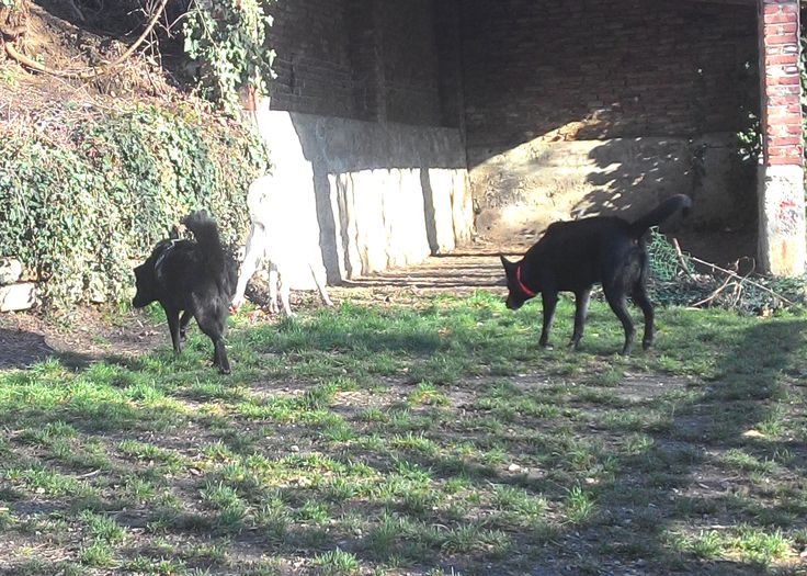 01/03/2016 - Torino con Peja e Pablo