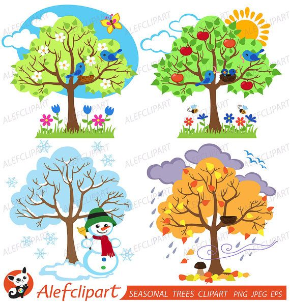 50% OFF SALE Four Seasons Trees Clipart  Seasonal Trees and Birds Clipart Clip Art Vectors - Commercial and Personal Use