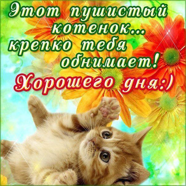 Открытки с котятами и пожеланиями доброго утра и хорошего дня
