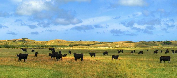 King Island Pastures, Tasmania.