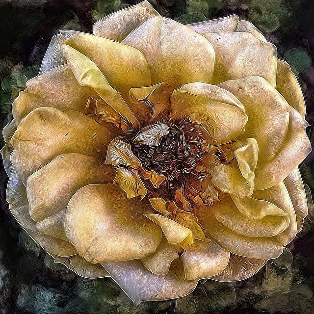 Yellow Rose for Lavonne | Flickr - Photo Sharing!