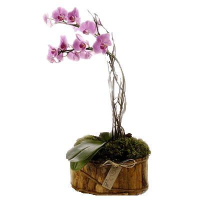 L'orchidea, pianta da interno elegante e raffinata.