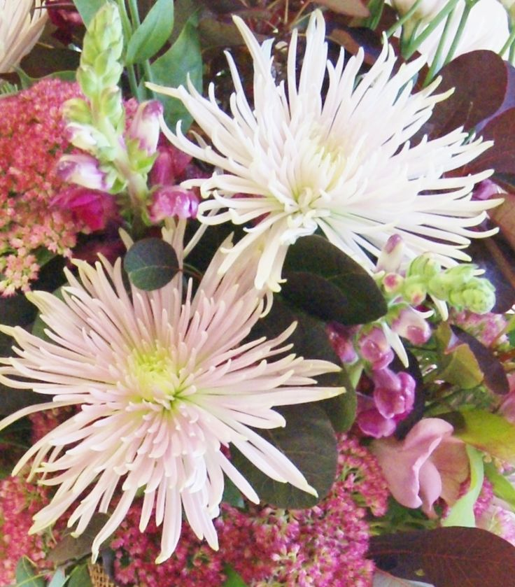 Florissimo - Flowers for weddings and events in Shropshire. CHRYSANTHEMUM BLOOM, ALL YEAR. From Florissimo Flower Directory at https://uk.pinterest.com/ByFlorissimo/flower-directory/ | Most colours, not blue