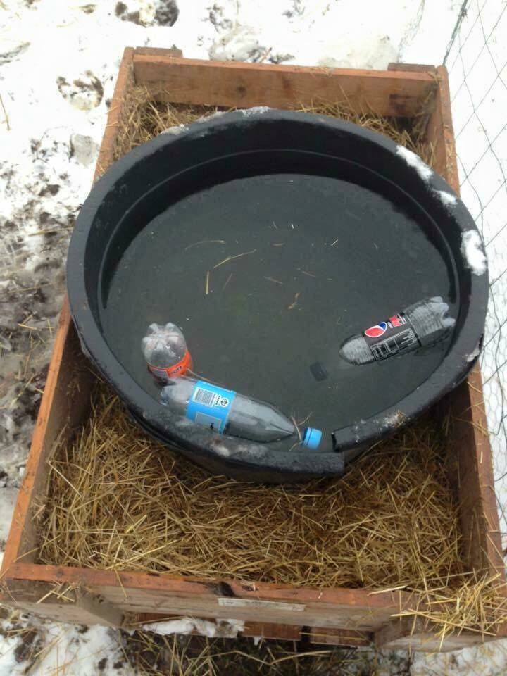 Salt water bottles on large watering troughs to keep the water from freezing