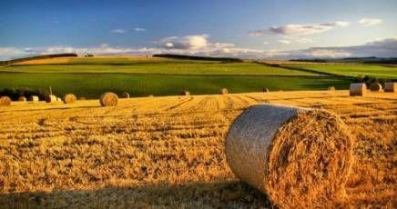 agricoltura sardegna - Cerca con Google